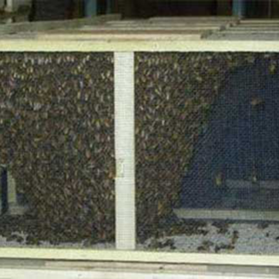 3lbs of Bees